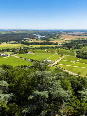 Grüne Rebflächen an Fluss unter blauem Himmel - Silkes Weinkeller