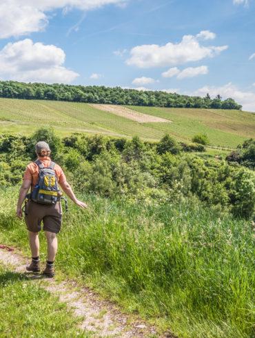 Wanderer in begrünten Weinbergen unter blauem Himmel | Silkes Weinkeller