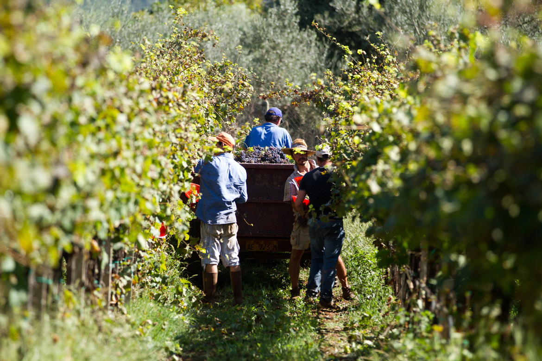 Winzer bei der Arbeit im Weingut