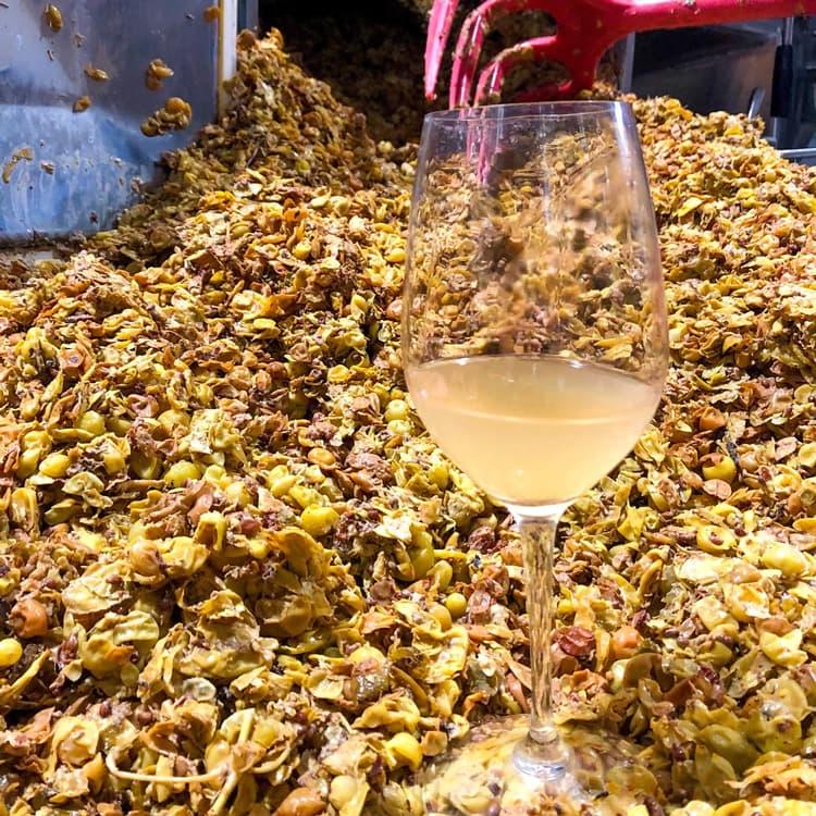 Glas mit Weißwein vor geernteten Trauben